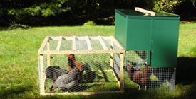 Halflap Henhouse Portable Chicken Coop and Run with Chickens